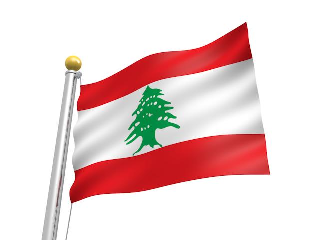 Lebanon Cedar 06