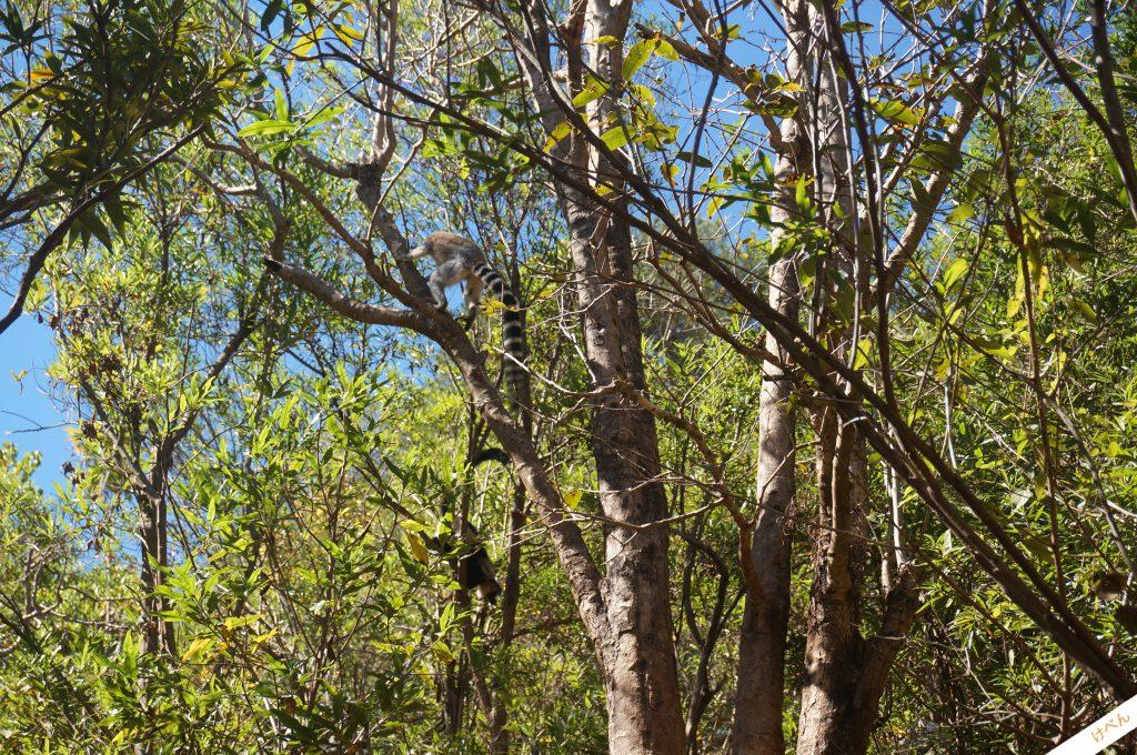 Lemurs Park 02