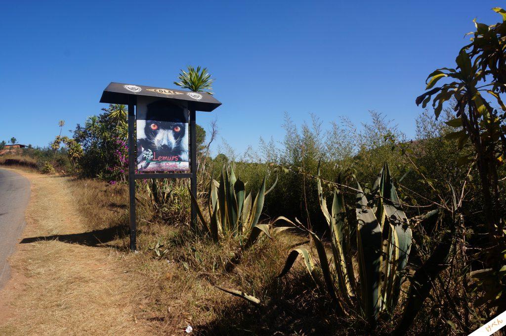 Lemurs Park 04