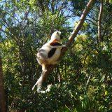 Madagascar_thumbnail